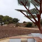 Diseño israelí para que la energía crezca en los árboles